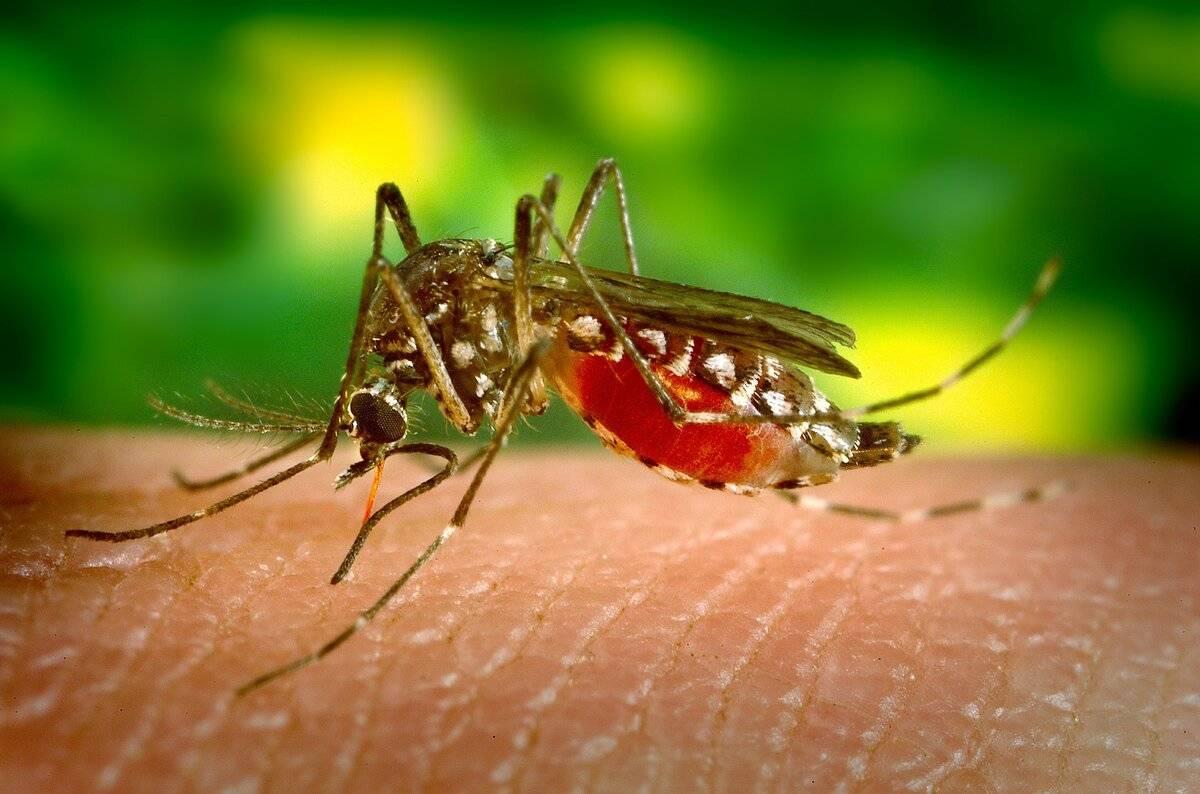 Трансмиссивные болезни — википедия. что такое трансмиссивные болезни