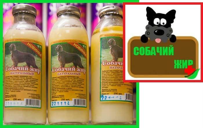 Собачий жир лечебные свойства и применение