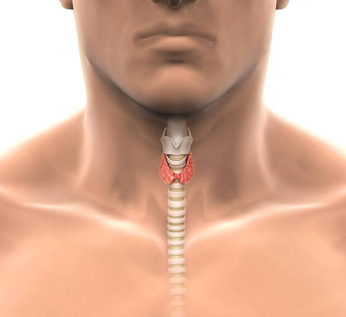 Щитовидная железа симптомы заболевания у мужчин анализы: анализы, диагноз, железа, заболевания, лечение, медикаменты, мужчин, симптомы, способы, щитовидная