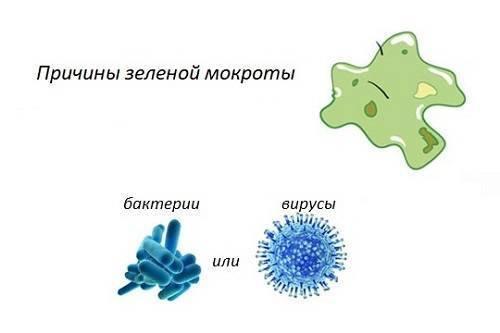 Появление мокроты зеленого цвета при кашле: причины, симптомы, лечение