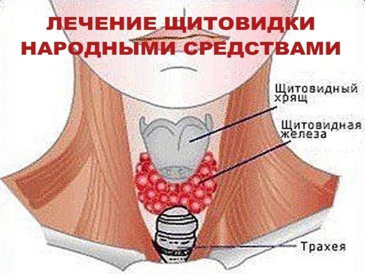 Эффективное лечение щитовидки народными средствами у женщин