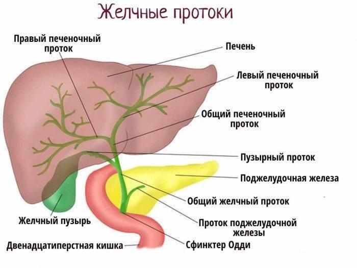 желчь в печени лечение