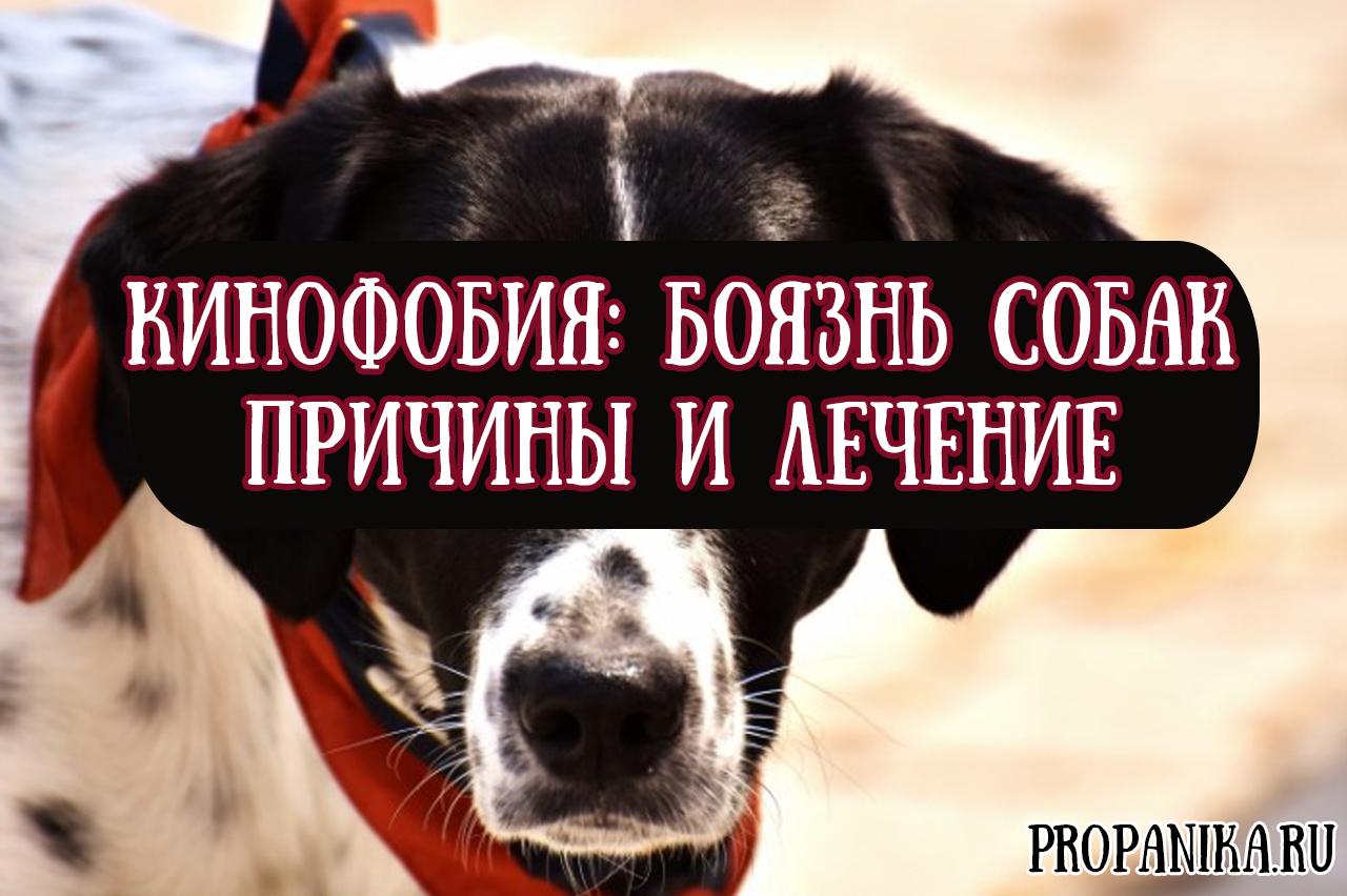 боязнь собак фобия