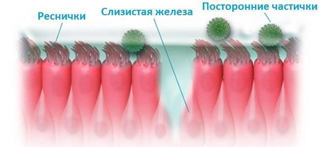Как восстановить слизистую носа после капель и не только