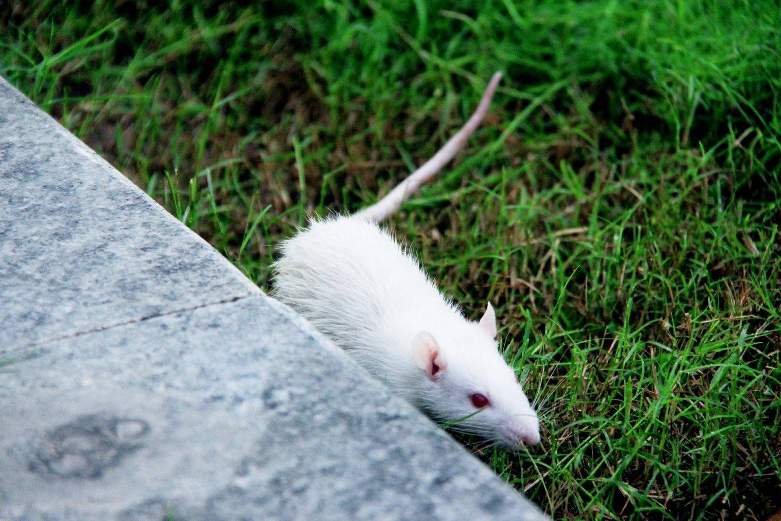 Чего боятся мыши