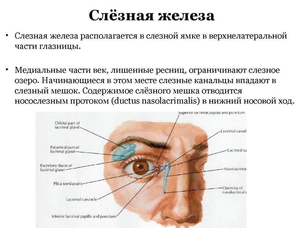 воспаление слезной железы симптомы