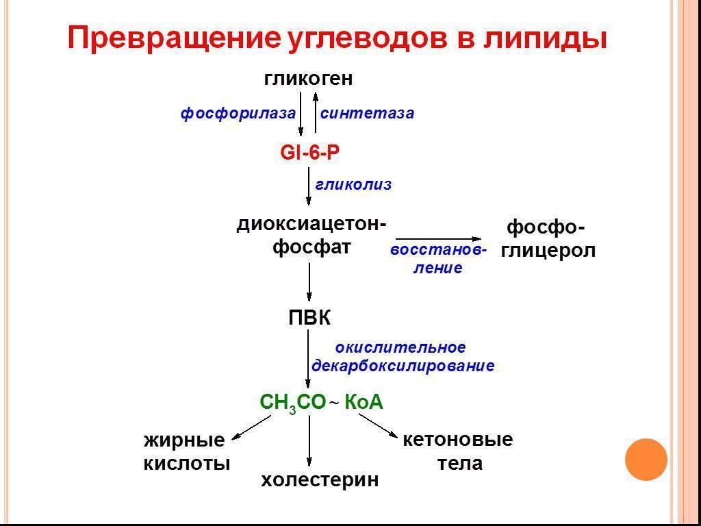 синтез липидов это процесс
