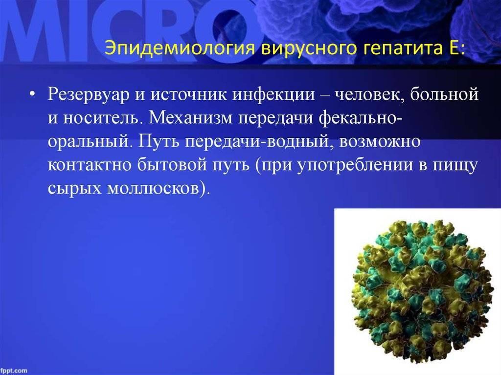 Вирус гепатита е: пути передачи, симптомы, лечение и профилактика