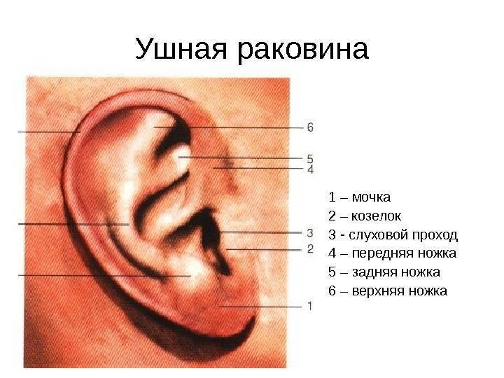 болит козелок уха при надавливании