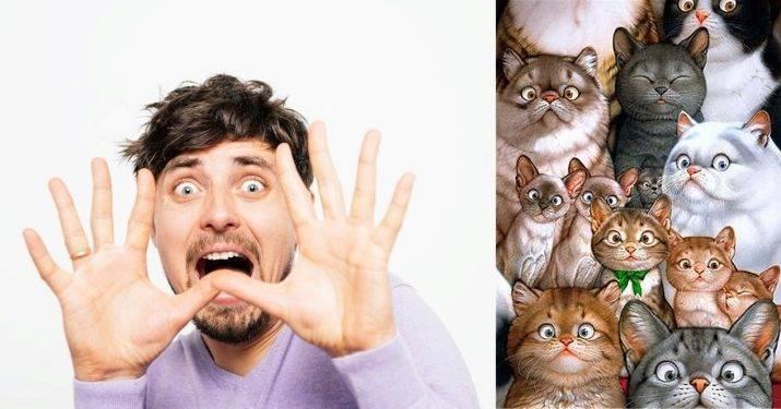 боязнь кошек название