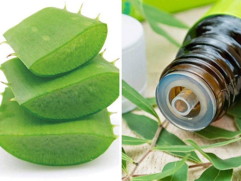 Эффективное применение масла чайного дерева при различных заболеваниях