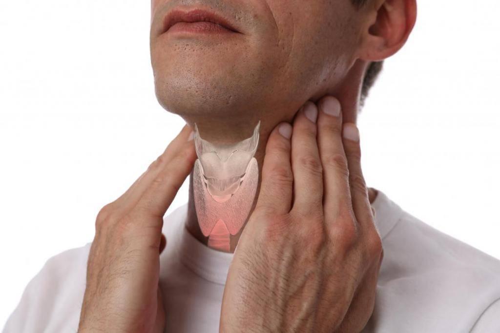 щитовидной железа