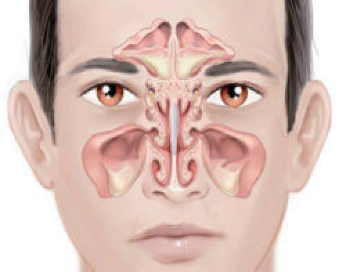 Почему болит нос: причины и методы лечения