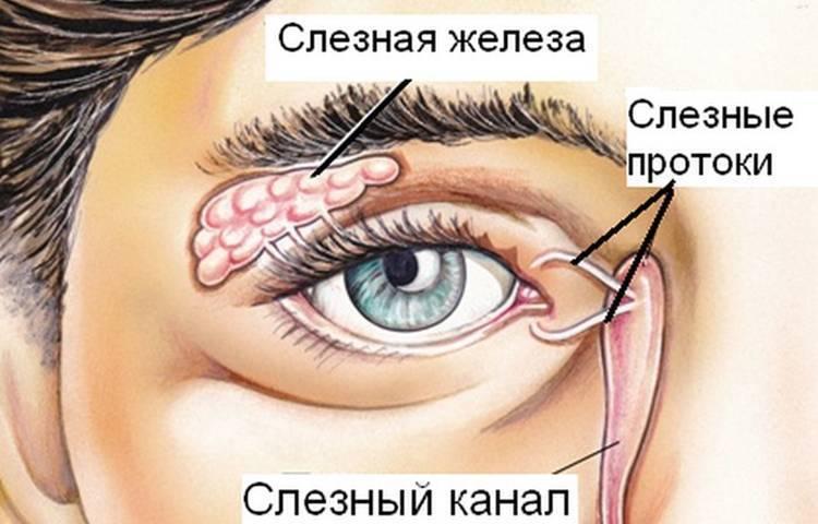 слезная железа воспаление