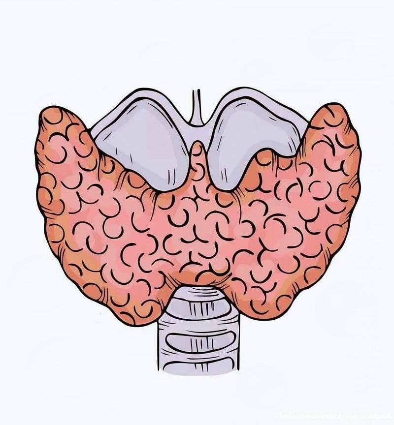щитовидная железа это что
