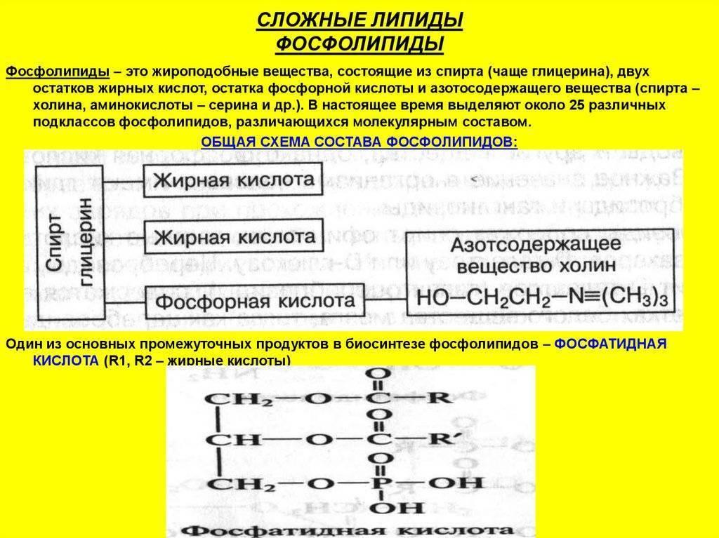 молекула липида строение