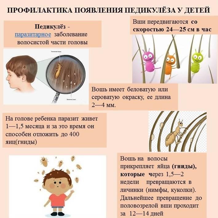 профилактика от вшей у детей