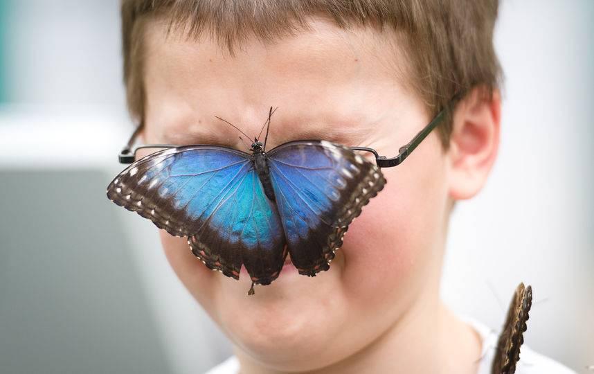 Лепидоптерофобия: бабочки как источник страха