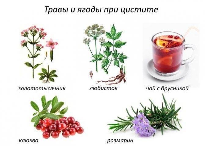 продукты при цистите