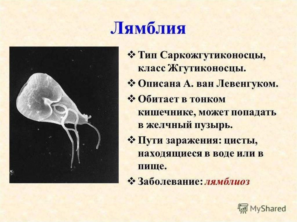 как узнать есть ли лямблии в организме человека