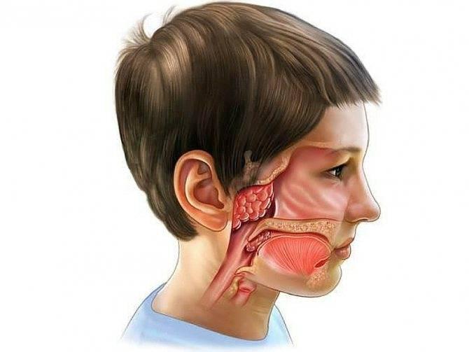 Причины зеленых соплей у ребенка и методы лечения
