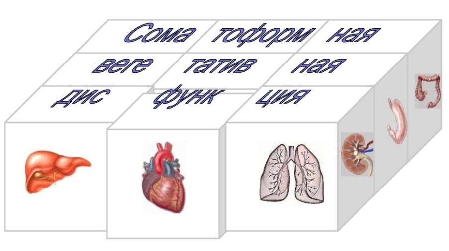Соматоформная дисфункция вегетативной нервной системы — признаки и методы лечения