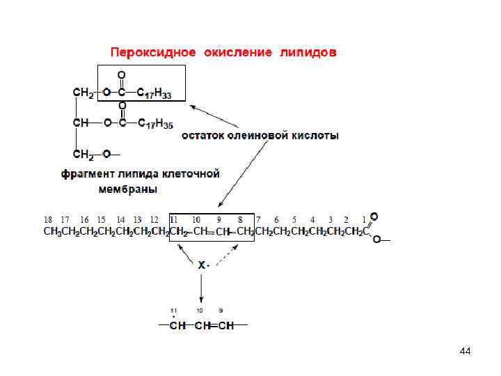 Стабилизация мембран и перекисное окисление липидов (решённые билеты по биофизике)