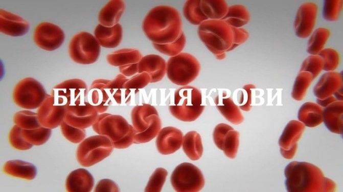 Что значит антитела igg к токсокарам в анализе крови