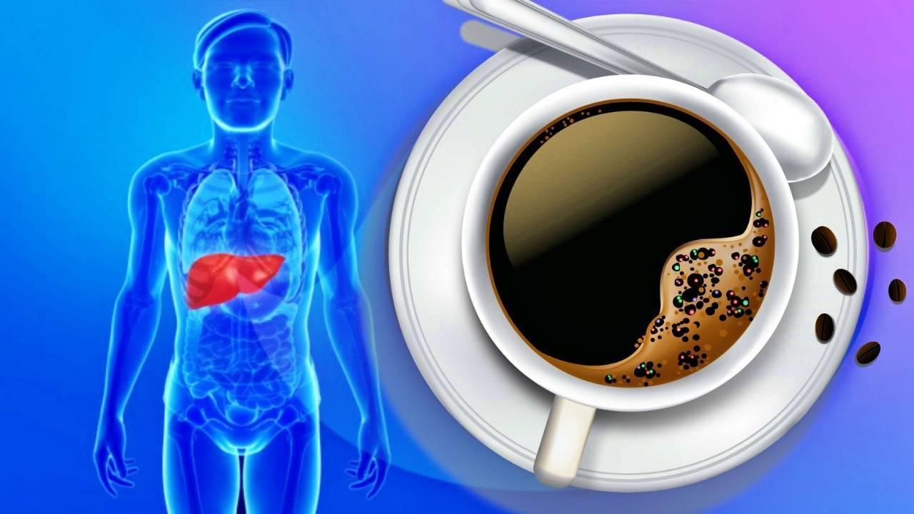 Как кофе влияет на печень: современный взгляд на проблему