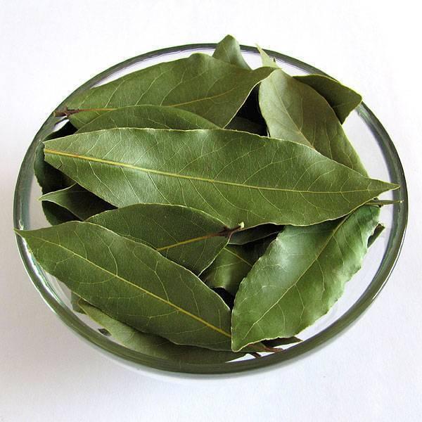 При цистите как лечить лавровым листом
