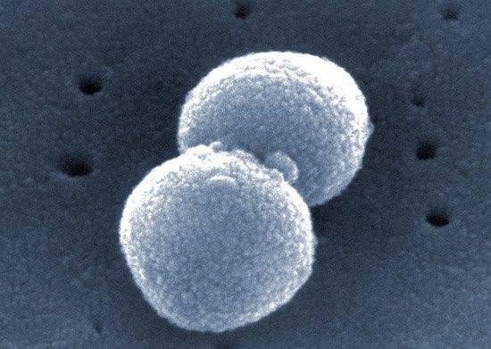 Стрептококки в крови при анализе