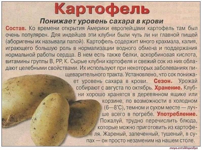 Содержится ли холестерин в картофеле?