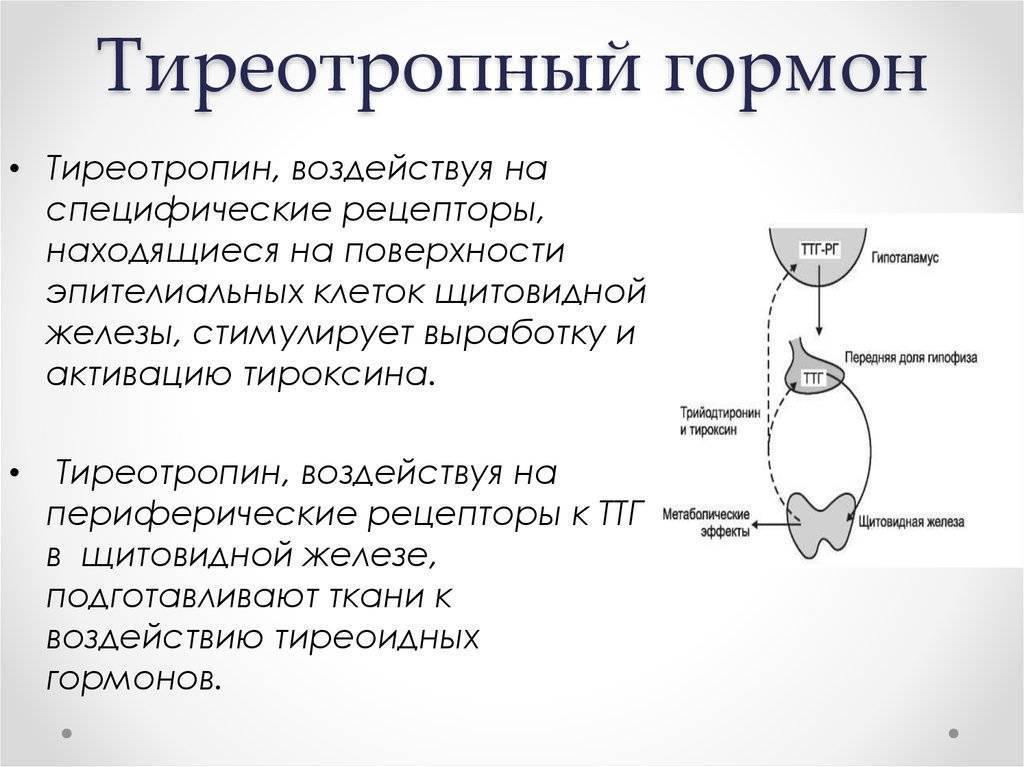 гормоны щитовидной железы ттг