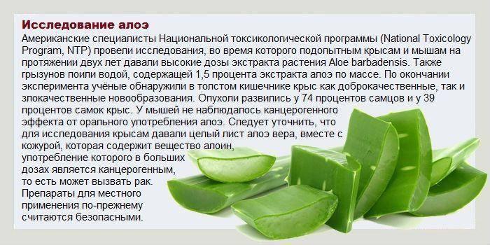 Можно ли использовать алоэ от насморка и как применять? рецепты приготовления лечебных средств
