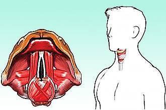 Как лечить осипший голос у взрослого. народные средства, медикаменты, гомеопатия
