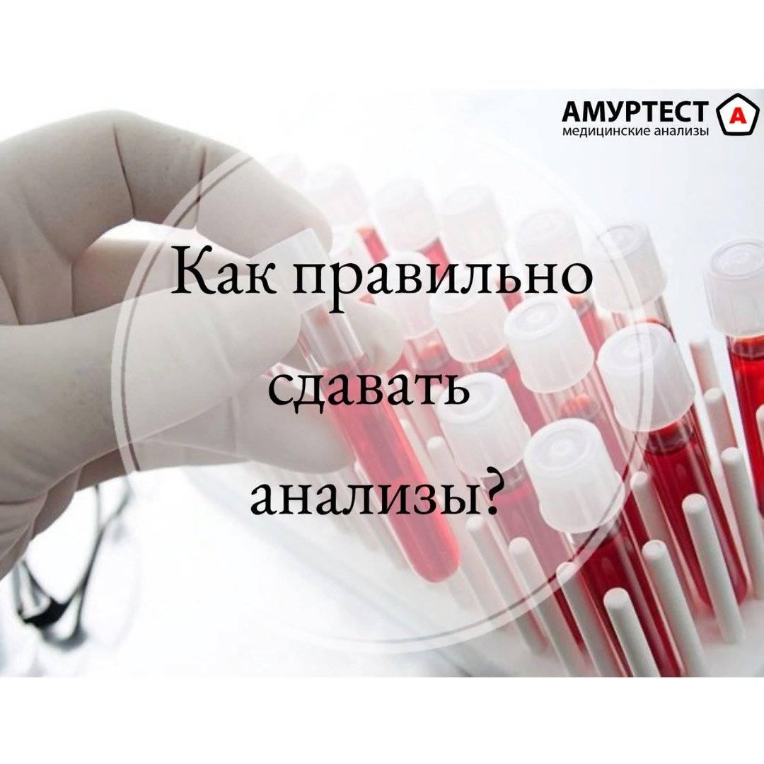 Как правильно подготовиться к сдаче анализа крови на холестерин