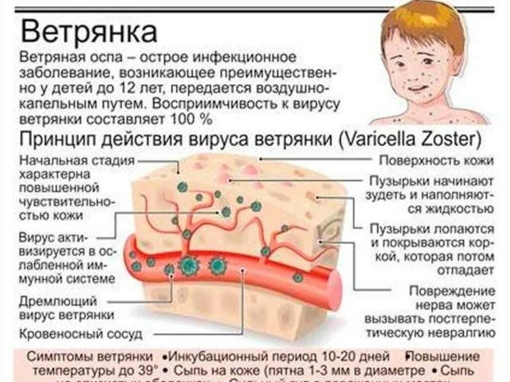 диета при герпесе на теле
