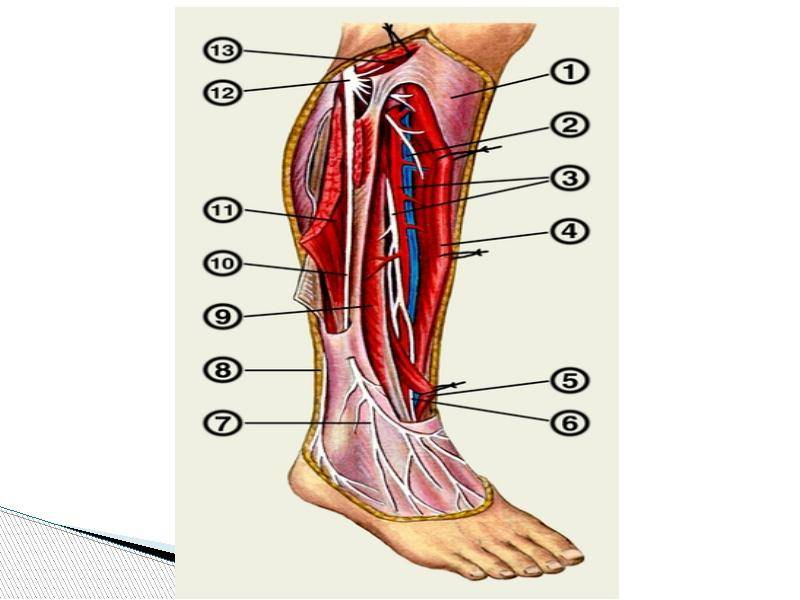 лечить неврит малоберцового нерва