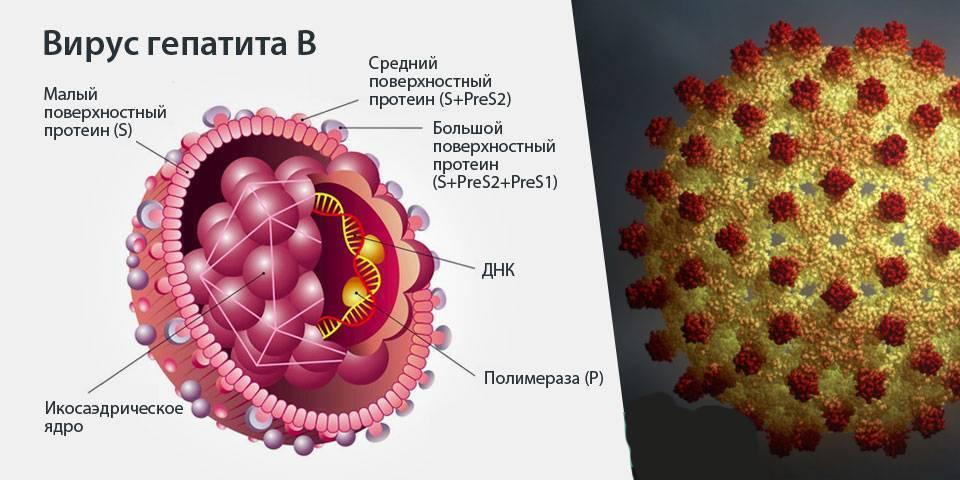 острый вирусный гепатит в