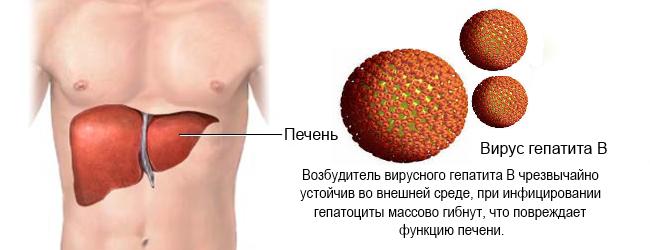гепатит в прогноз