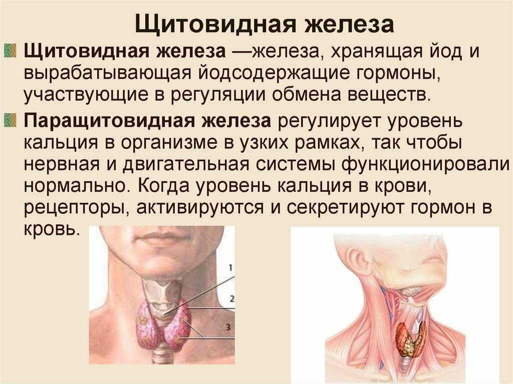 таблетки для щитовидки