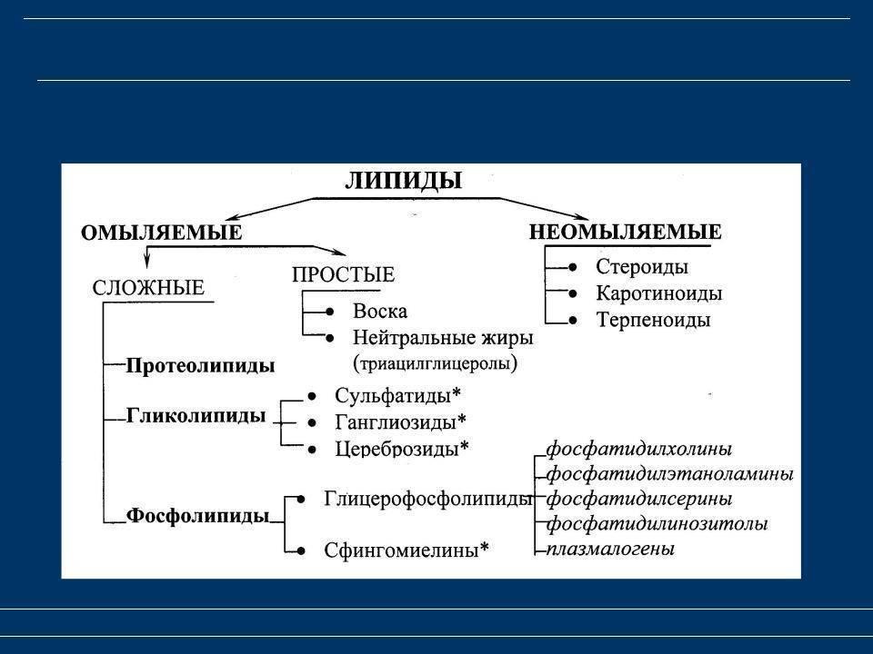 Особенности разных классов липидов и их функция