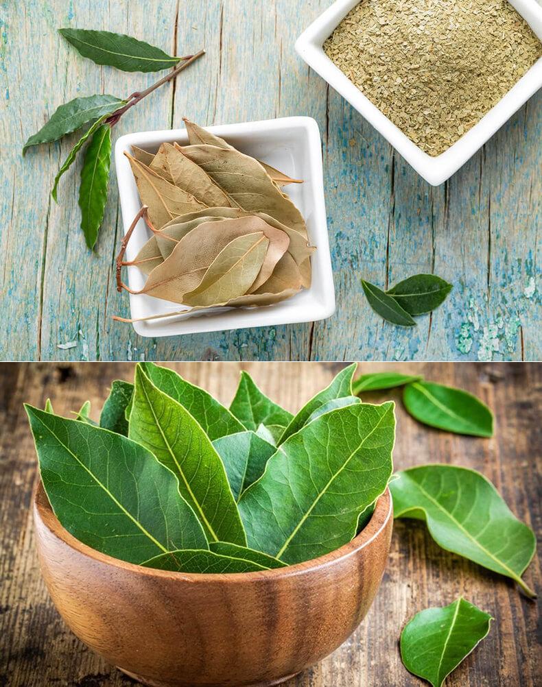 Цистит лечение лавровым листом