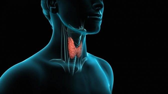 щитовидная железа и прыщи