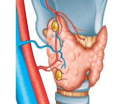 Когда болит щитовидная железа: болит, диагностика, железа, когда, методы терапии, обострение, средства, щитовидная