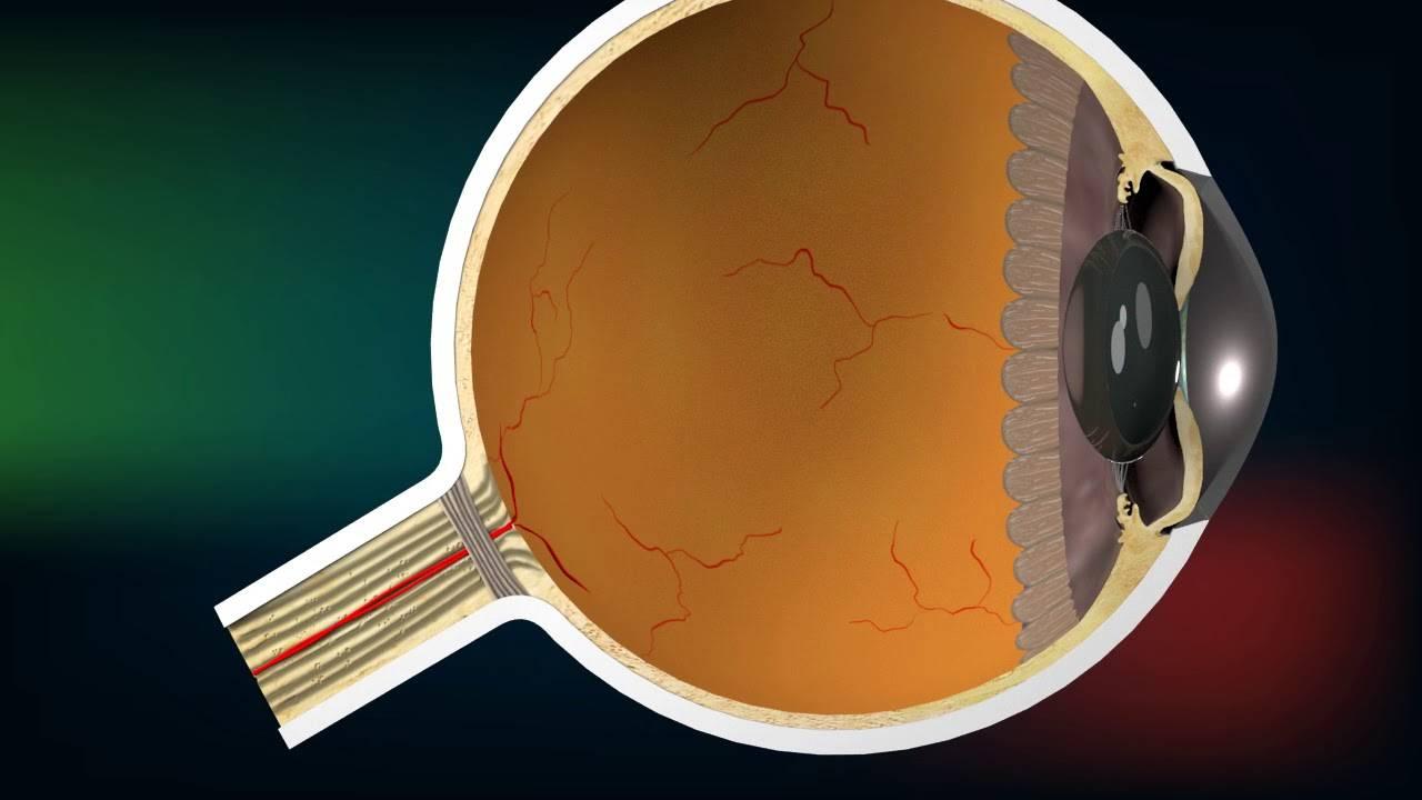 Питание при глаукоме с повышенным давлением