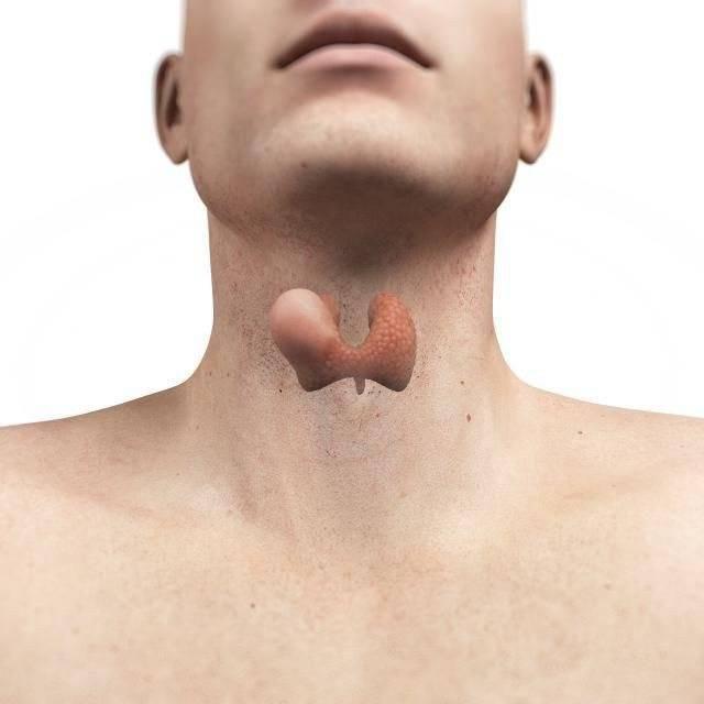 Узлы на щитовидке - как их рассосать и могут ли исчезнуть сами
