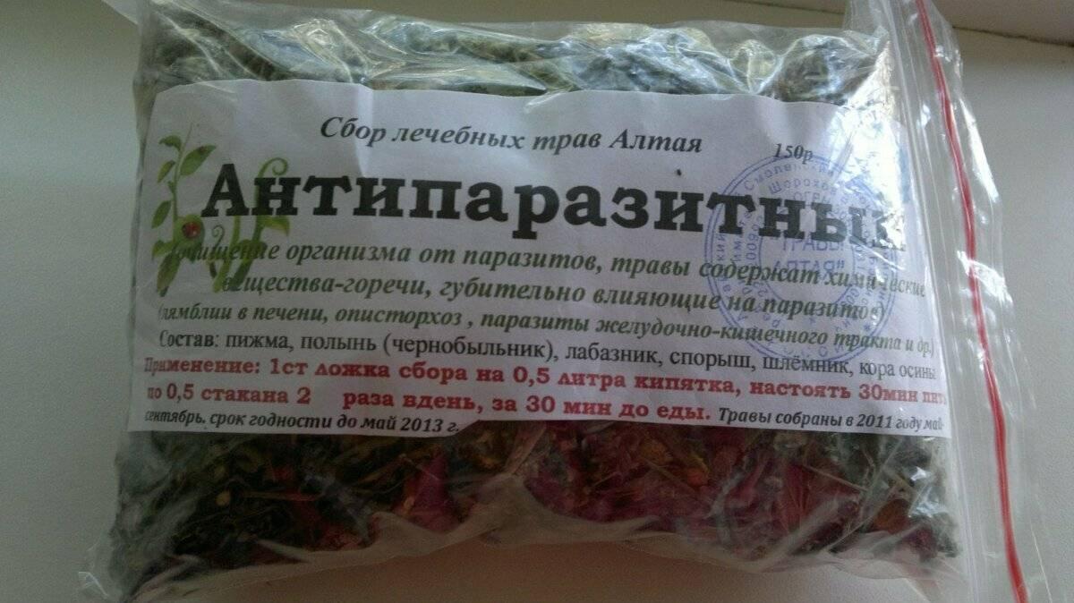 травы против паразитов в организме человека