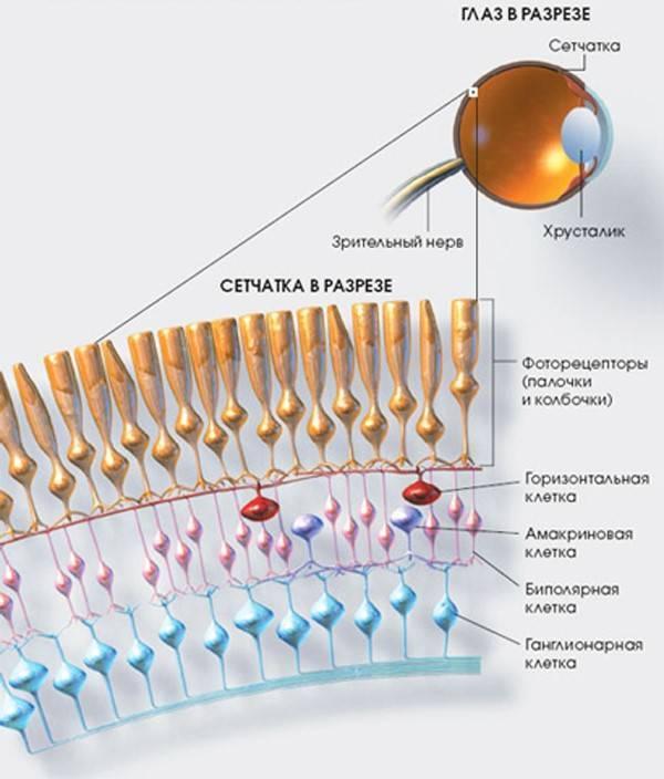 Сетчатка глаза — болезни и лечение