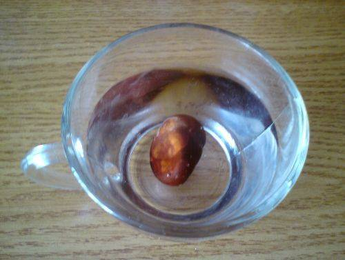 Как могут помочь плоды конского каштана при гайморите?